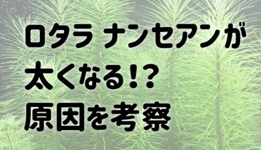ロタラ ナンセアンの茎が太い??原因を考察