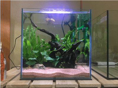 30cm水槽201811-1