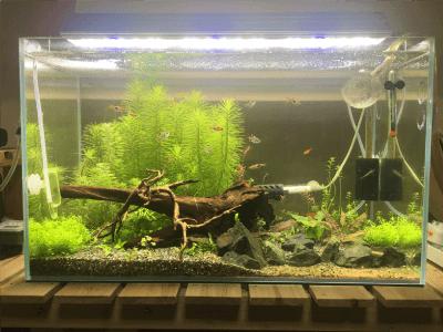 60cm水槽201811-1