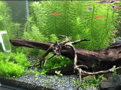 60cm水槽201811-3