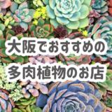 大阪でおすすめの多肉植物のお店3選