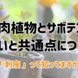 多肉植物とサボテンの違いについて
