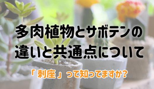 多肉植物とサボテンの違いと共通点|「刺座」って知ってますか?