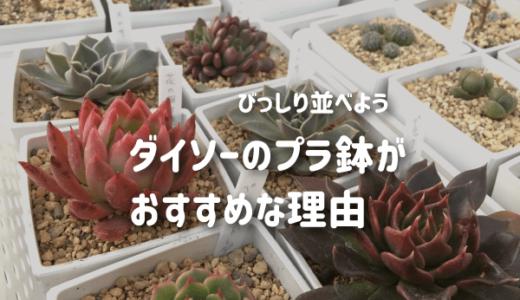 多肉植物にダイソーのプラ鉢がおすすめ!