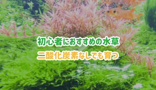 【アクアリウム】初心者におすすめの水草5選|CO2なしでもOK!