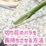 切り花のバラを長持ちさせる方法