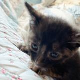 生後一か月の猫がやってきた!|一週間の様子とやった事