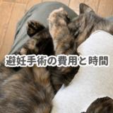 メス猫の避妊手術の費用と時間
