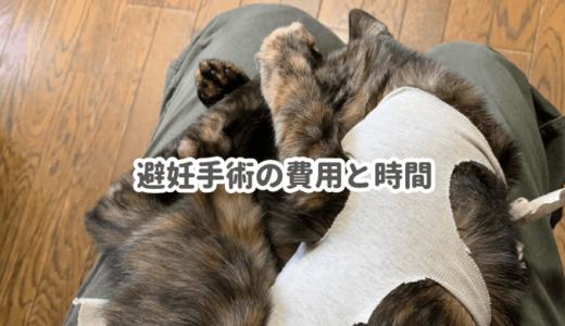 メス猫の避妊手術でかかった費用と時間