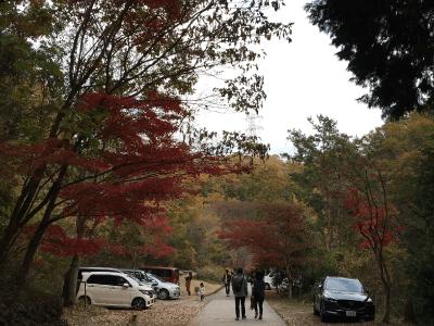 ほしだ園地の紅葉2