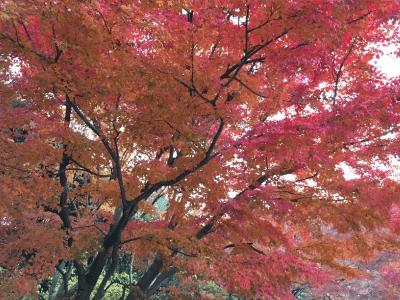 勝尾寺の紅葉1