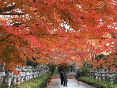 勝尾寺の紅葉2