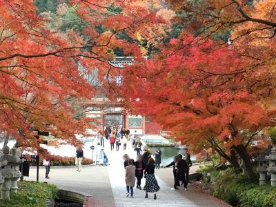 勝尾寺の紅葉3