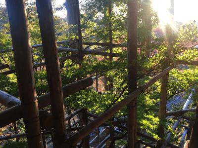 清水寺の改修内からの写真