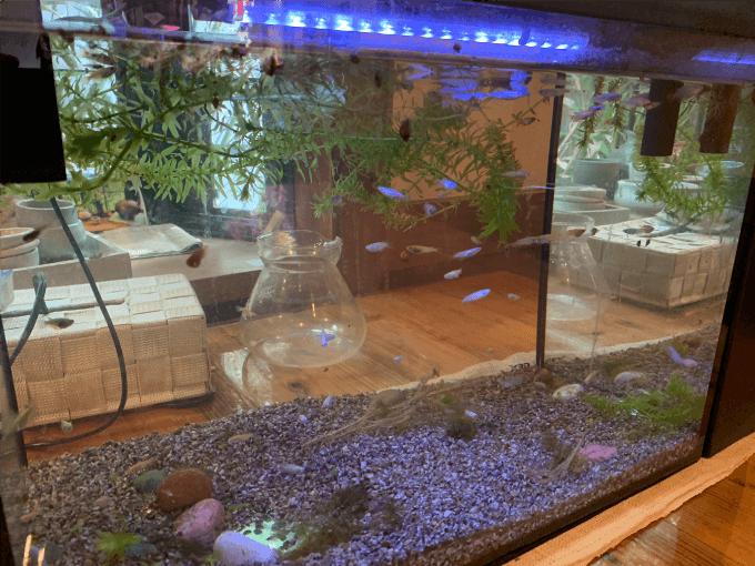翠藍の水槽